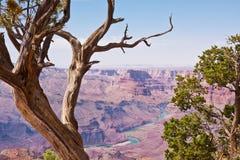 jarów drzewa uroczyści jałowcowi Obraz Royalty Free
