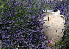 Jar amidst Lavender. A traditional ornamental jar amidst lush lavenders Royalty Free Stock Photography