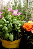 Jars on a balcony containing aromatic plants and flowers stock image