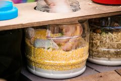 Jar with balls and mouses and human hand finding something. Game quest for children and adults.  stock photography