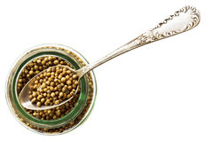 Jar of coriander seeds Stock Image