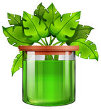 A jar with a green plant Stock Photography