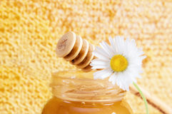 Jar of honey and daisy Stock Image