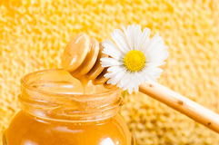 Jar of honey and daisy Royalty Free Stock Photography