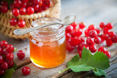 Jar of honey and Guelder rose or Viburnum berries. Stock Images