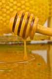 Jar of honey with wooden drizzler on honeycomb background Stock Photo