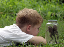 Jar Hopping. Two toads hopping in a jar while a little boy looks on Stock Photos