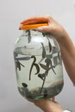 Jar with leeches Royalty Free Stock Photos