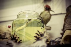 Jar with a liquid and a snake inside and a spider to decorate halloween. A jar with a liquid and a snake inside and a spider to decorate halloween Royalty Free Stock Photo