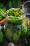 Jar pickles other ingredients pickling Royalty Free Stock Photo
