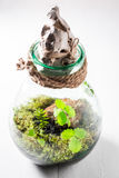 Jar with piece of forest Royalty Free Stock Photography
