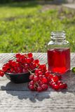 Jar of red currant jelly and fresh berries. Garden Royalty Free Stock Image