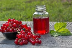 Jar of red currant jelly and fresh berries. Garden Royalty Free Stock Photo