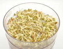 Jar with sprouting vegetable Stock Photo