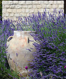 Jar, Stonewall, and Lavender. A traditional ornamental jar against a stone wall amidst lush lavenders Royalty Free Stock Photo