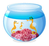 A jar with three seahorses Stock Photo