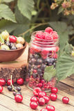 Jar of various berries Royalty Free Stock Photography