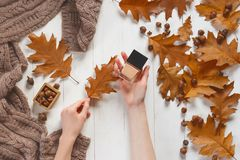 Free Jar With A Tonal Cream And Oak Autumn Leaf In The Woman`s Hands. Top View. Natural Beauty Cosmetics Concept. Autumn Royalty Free Stock Photography - 103872967