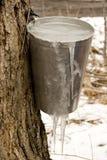 Jarabe de arce congelado Imágenes de archivo libres de regalías