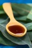 Jarabe de la tos del eucalipto Foto de archivo libre de regalías