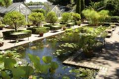 Jardín 01 de Koi Imagenes de archivo