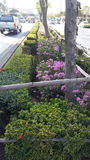 Jardín Fotos de archivo