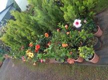 Jardín Imagen de archivo libre de regalías