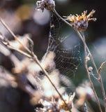 Jardín abandonado en octubre Fotografía de archivo