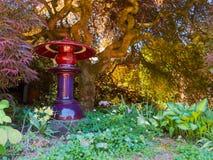 Jardín abrigado debajo de un arce japonés Imagen de archivo