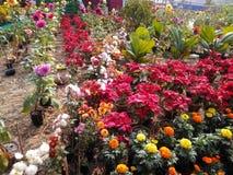 Jardín agradable Fotografía de archivo libre de regalías
