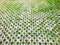 Jardín agradable adornado con las piedras y las plantas a casa Imagen de archivo
