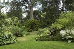 Jardín ajardinado con los arbustos de los árboles Fotos de archivo libres de regalías