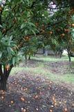 Jardín anaranjado Imagen de archivo libre de regalías