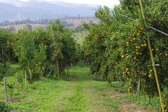 Jardín anaranjado Foto de archivo libre de regalías