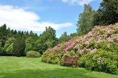 Jardín arbustivo Foto de archivo