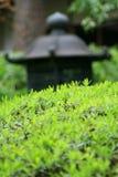 Jardín asiático Fotografía de archivo libre de regalías