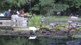 Jardín asiático típico con el lago y las flores almacen de video