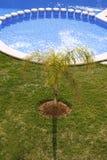 Jardín azul redondo de la palmera de la piscina Fotos de archivo