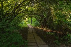 Jardín botánico fotografía de archivo libre de regalías