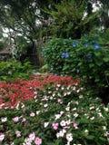 Jardín botánico Foto de archivo libre de regalías