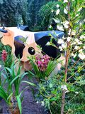 Jardín botánico con flores y una vaca fotos de archivo