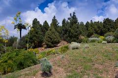 Jardín botánico de Barcelona Foto de archivo libre de regalías