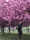 Jardín botánico de Brooklyn, NYC Imágenes de archivo libres de regalías