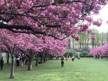 Jardín botánico de Brooklyn, NYC Imagenes de archivo