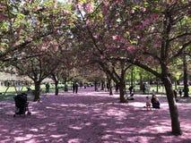 Jardín botánico de Brooklyn, NYC Foto de archivo