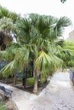 Jardín botánico de Catania Foto de archivo libre de regalías
