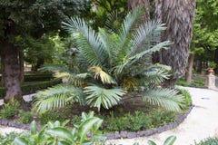 Jardín botánico de Catania Fotos de archivo