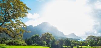 Jardín botánico de Ciudad del Cabo fotografía de archivo libre de regalías