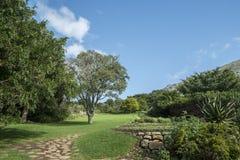 Jardín botánico de Ciudad del Cabo imagen de archivo libre de regalías