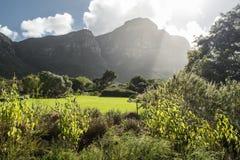Jardín botánico de Ciudad del Cabo foto de archivo